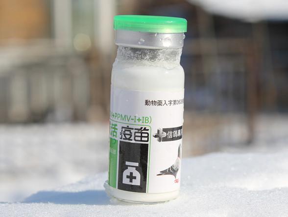 新城疫腺病毒传支三联油乳剂灭活疫苗(台湾亿冠)满包邮天下鸽药