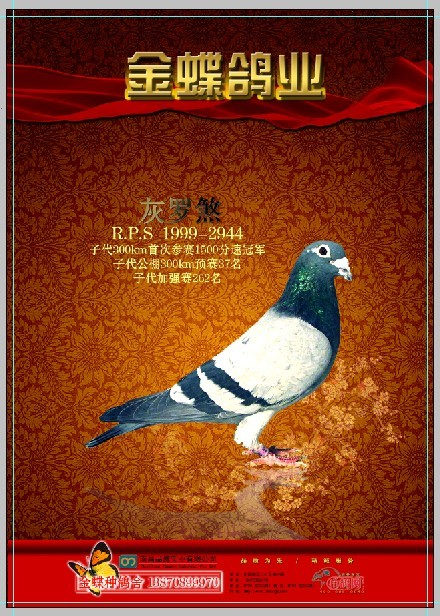 信鸽广告彩页设计风格四