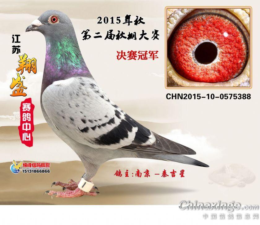 15年江苏翔盛公棚决赛冠军