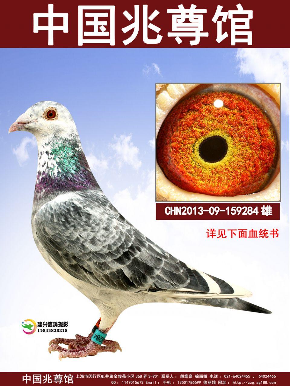 中国兆尊馆