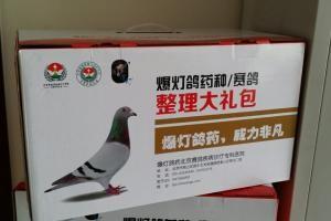 爆灯套装赢在2016种鸽总整理套装 天下鸽药