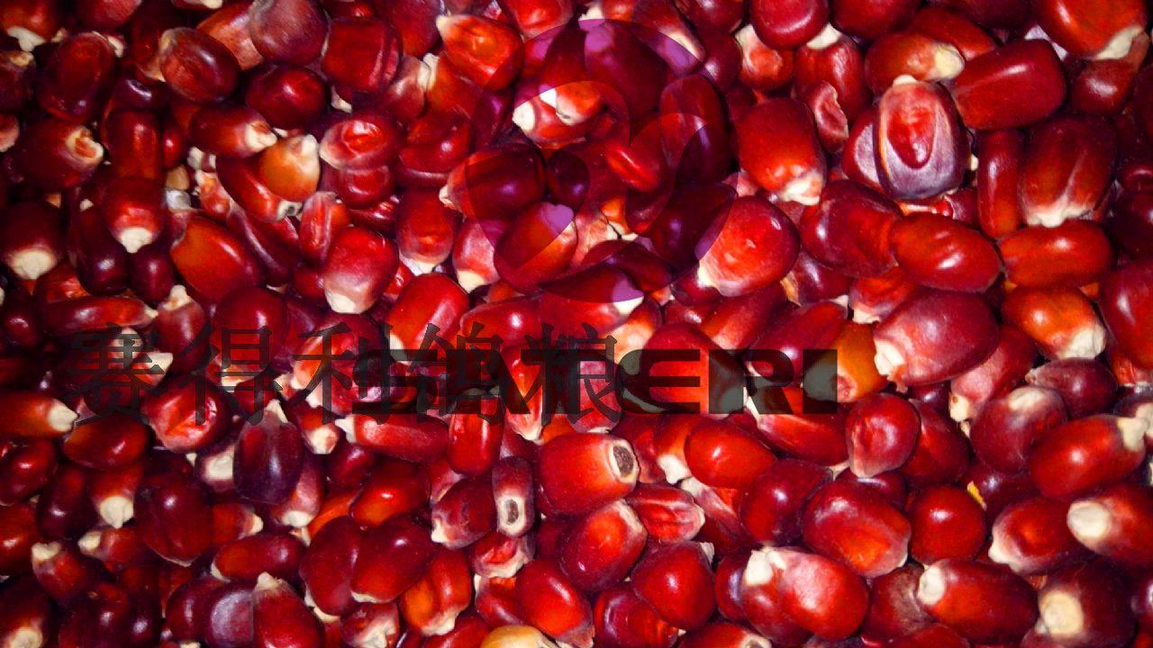 法国红玉米