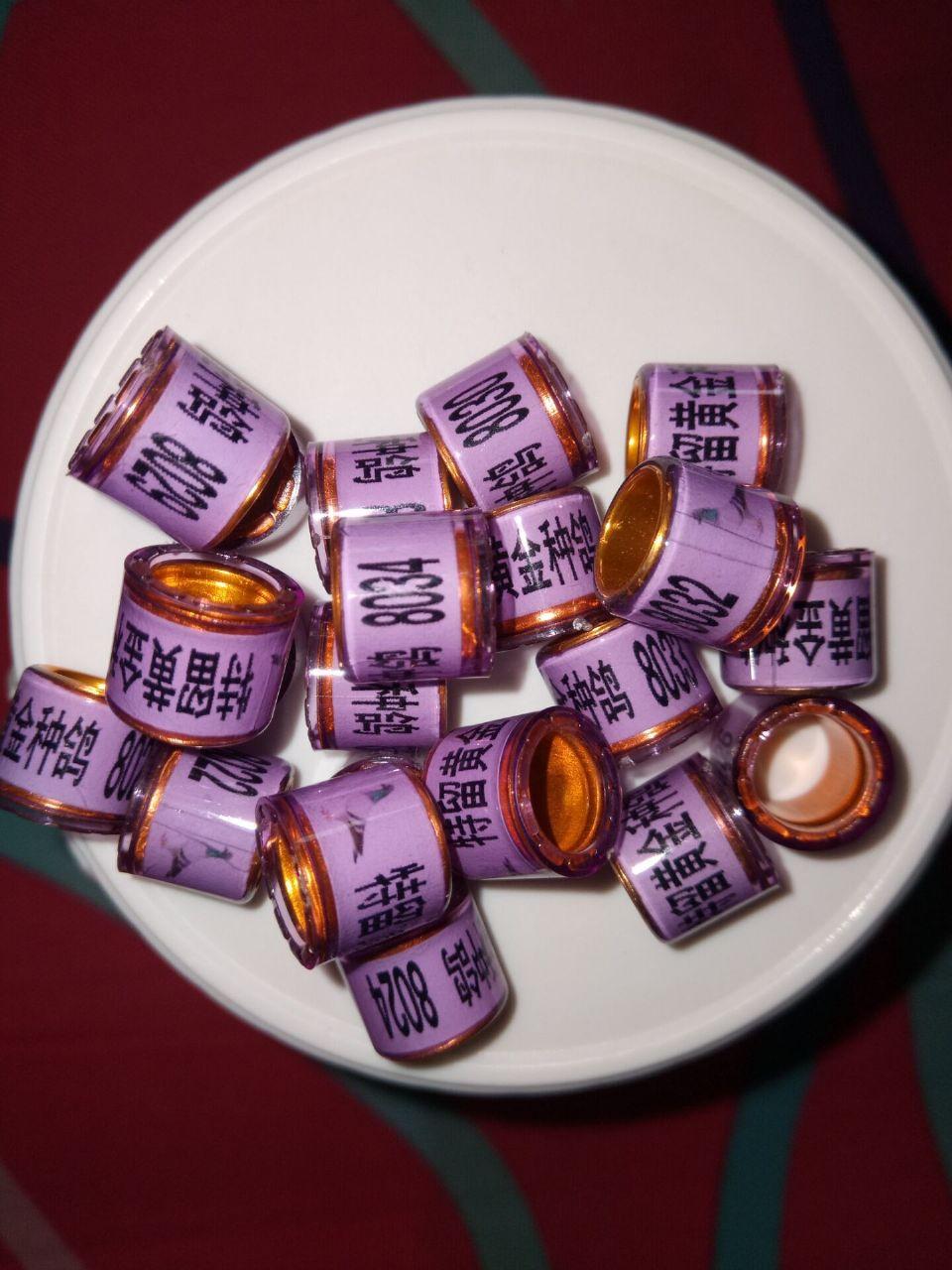特留黄金种鸽-紫色