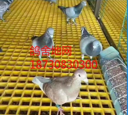 鸽舍养殖专用地网