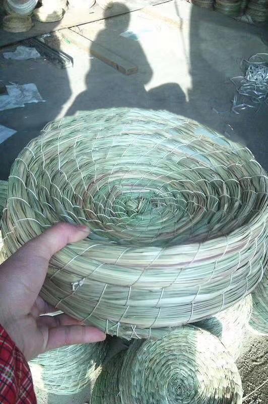 大帽子油草巢盆