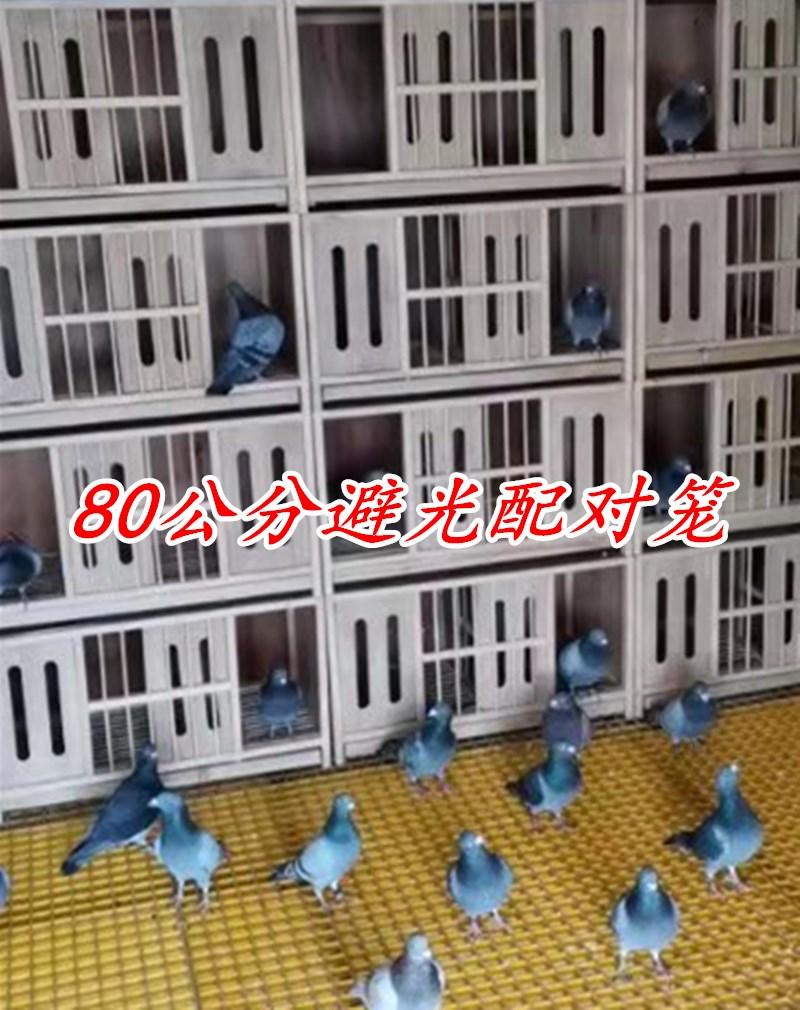 鸽子配对笼/标准80配对笼