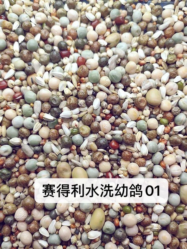 水洗幼鸽01