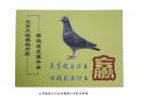 北京天鸽赛鸽用药赛鸽速度赛手册