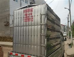 郑州鸽友定制不锈钢鸽笼