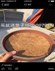 买盆送棕垫(草垫)