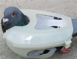 鸽子固定器