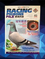 赛鸽档案40期