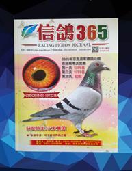 信鸽365