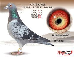 2015年3关鸽王