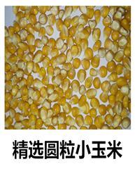 精选圆粒玉米