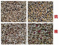 信鸽袋装鸽粮-多种原粮,健康配比,营养均衡