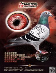 珍铭阁-信鸽商业摄影