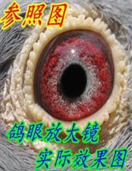 鸽眼放大镜 三合一微镜头+摄影灯 随机送蓝色固定盒