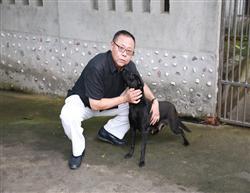 台湾鸽舍最佳守卫犬(高山犬)台湾土狗