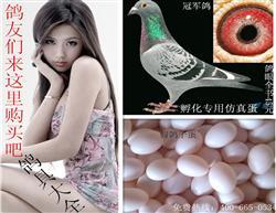 鸽子假蛋/鸽用假蛋/假蛋/高仿鸽子假蛋/假鸽子蛋