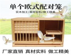 种鸽欧式配对笼 赛鸽巢箱