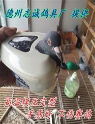 鸽子固定器 厂家供应套鸽器 养鸽必备神器