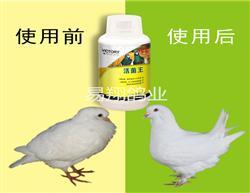 汉诺威鸽药【活菌王】 改善下痢水便、肠炎涨归
