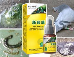 汉诺威鸽药【新疫康】新城疫腺病毒 沙门氏信鸽赛鸽用品水便绿便