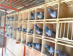 赛鸽巢箱 调节箱 鸽舍用休息巢箱