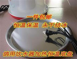鸽用水壶 饮水器 平底加热底盘 恒温器