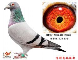 4-BELG2010-4101518