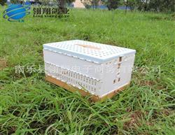 鸽子用品用具信鸽放飞笼塑料报到笼 冠亚军鸽笼ABS材质