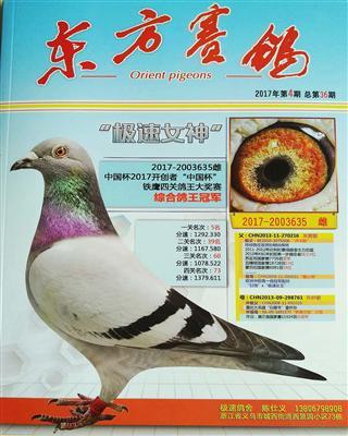 东方赛鸽 36期
