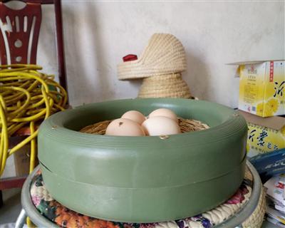 新款塑料巢盆