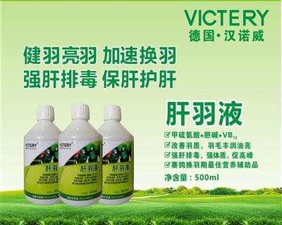 包邮 肝羽液  改善羽质强肝排毒 加速换羽