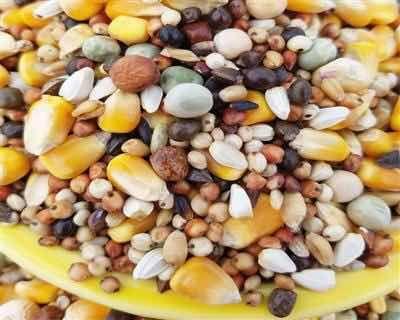骏达营养混合鸽粮包邮!鸽子饲料信鸽鸟食粮食2.5千克包邮多省