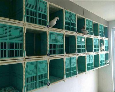 专利产品信鸽配对巢箱买家秀