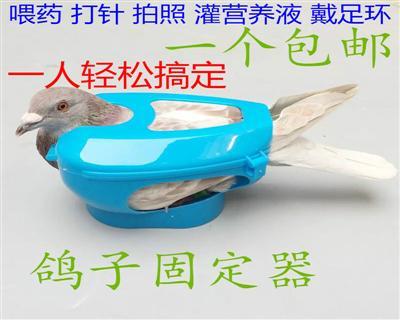 信鸽固定器架疫苗鸽痘束缚固定器 赛鸽拍照拍眼睛支架套环辅助器