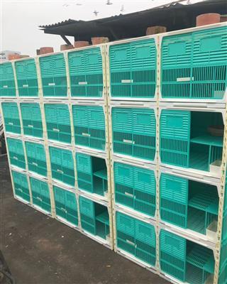 配对笼巢箱环保塑料种鸽饲养巢箱