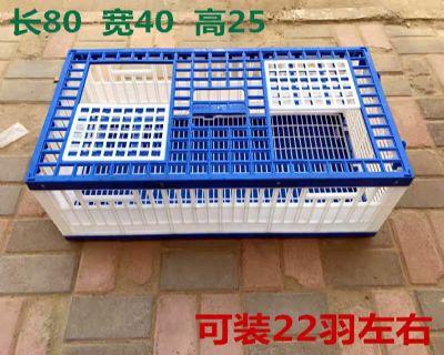 放飞笼/训放笼/报道笼/信鸽塑料笼