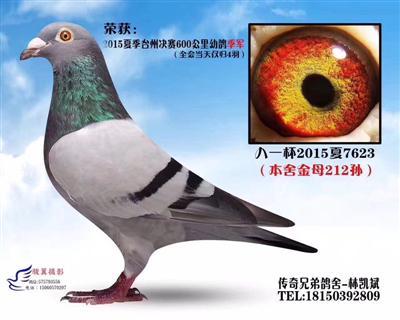 2015年夏季�_州�Q�600公里幼��季�(全����日�H�w4羽)