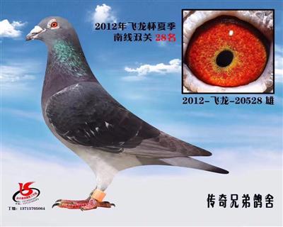 2012年飞龙杯夏季南线双飞28名