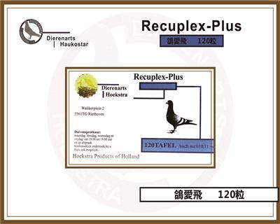 8号  鸽爱飞 Recuplex-Plus