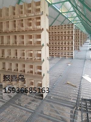 新疆绿缘鹏展国际赛鸽公棚栖架