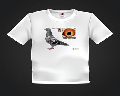 鸽友T恤订制