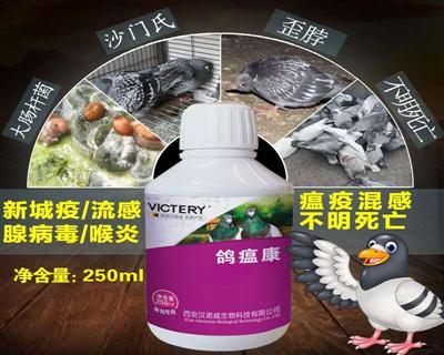 鸽瘟康:赛鸽各种瘟疫、病毒与细菌混合感染及疑难杂症,