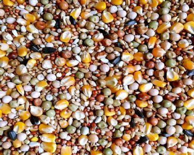 城南鸽业营养鸽粮带玉米营养赛飞饲料50斤包邮