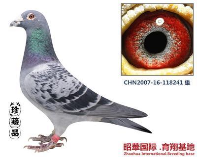 昭�A-241 雄