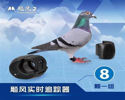 《预购》飚风信鸽赛鸽实时轨迹定位追踪器-《8颗追踪器