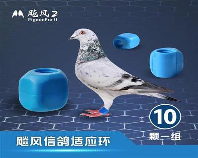 《预购》飚风信鸽适应环-《10颗装》